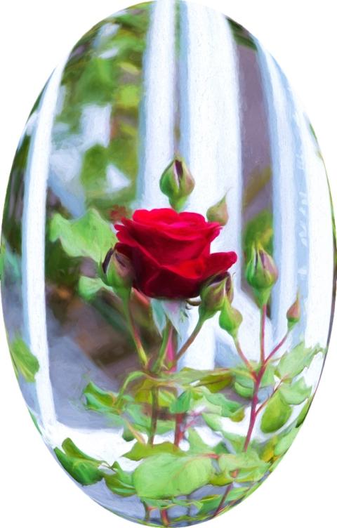 Roses 2147 sphereized2